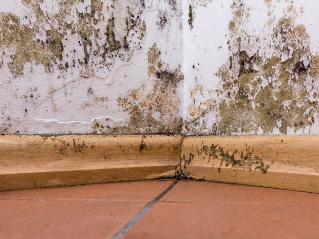 We'll make sure that you have a mold-free property